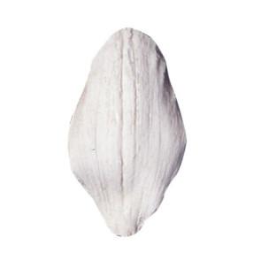Marcador de Veios Orquídea Cymbidium